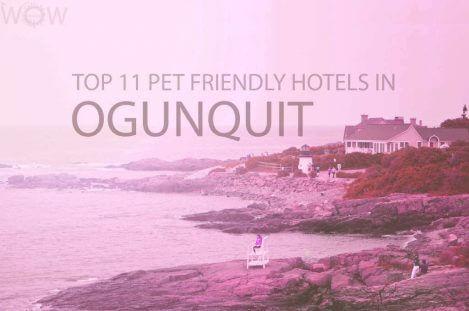 Top 11 Pet Friendly Hotels in Ogunquit Maine