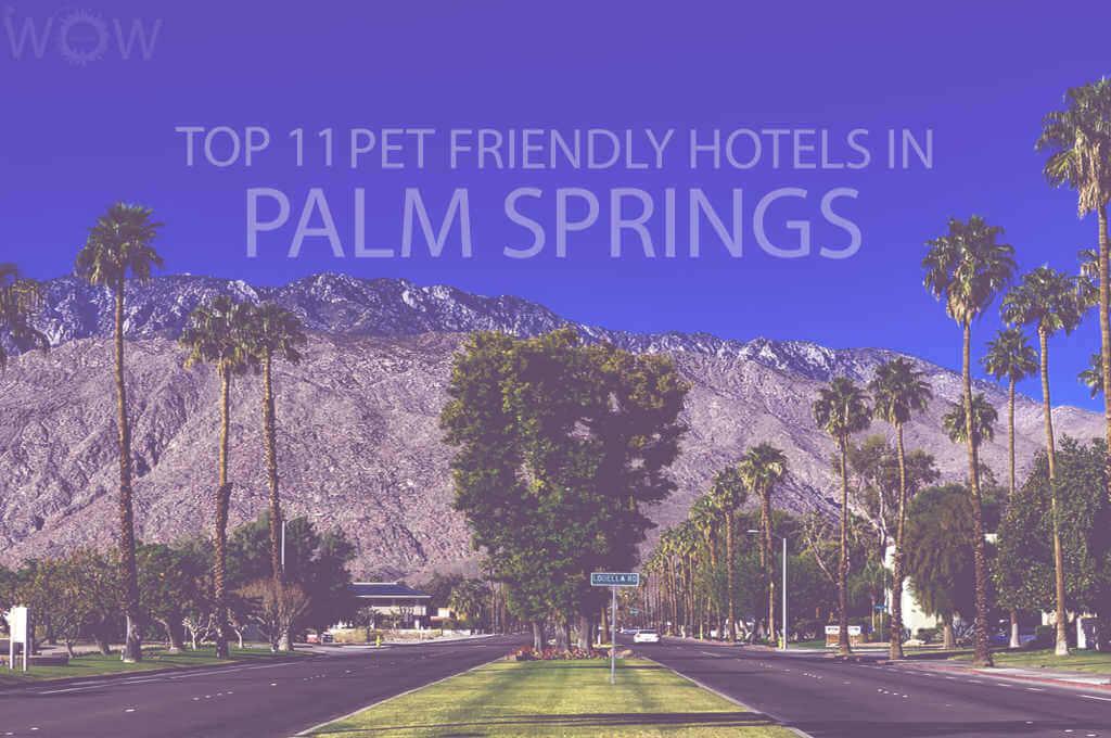 Top 11 Pet Friendly Hotels in Palm Springs