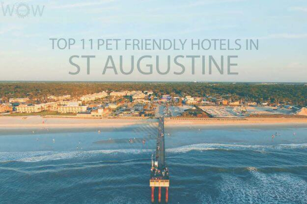 Top 11 Pet Friendly Hotels in St Augustine