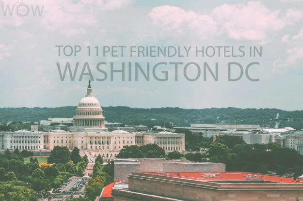 Top 11 Pet Friendly Hotels in Washington DC