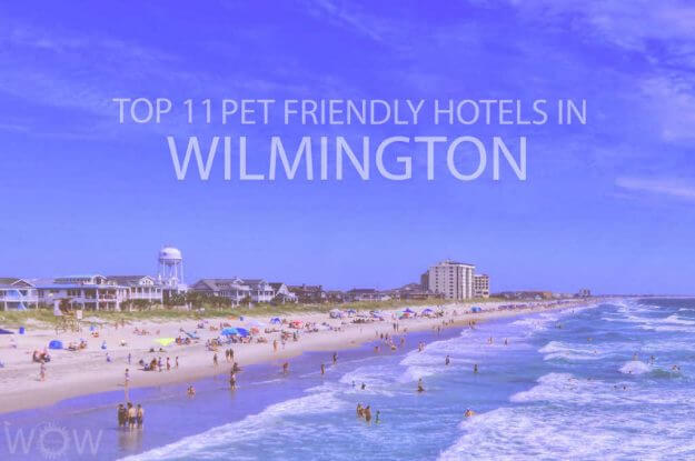 Top 11 Pet Friendly Hotels in Wilmington NC