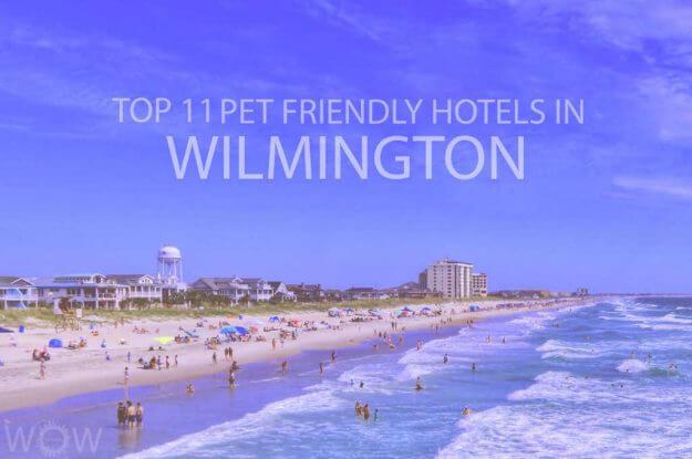 Top 11 Pet Friendly Hotels in Wilmington NC