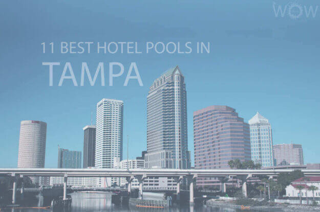 11 Best Hotel Pools In Tampa