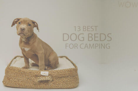 13 Best Dog Beds for Camping