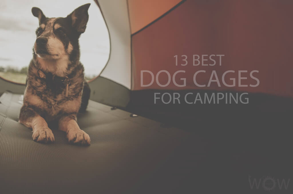 13 Best Dog Cages for Camping