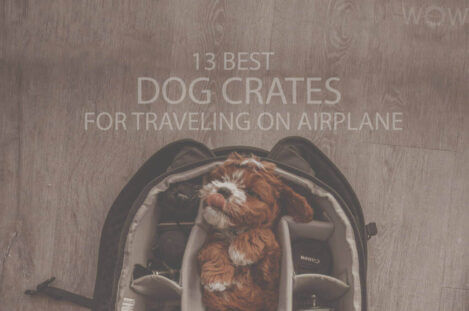 13 Best Dog Crates for Traveling on Airplane