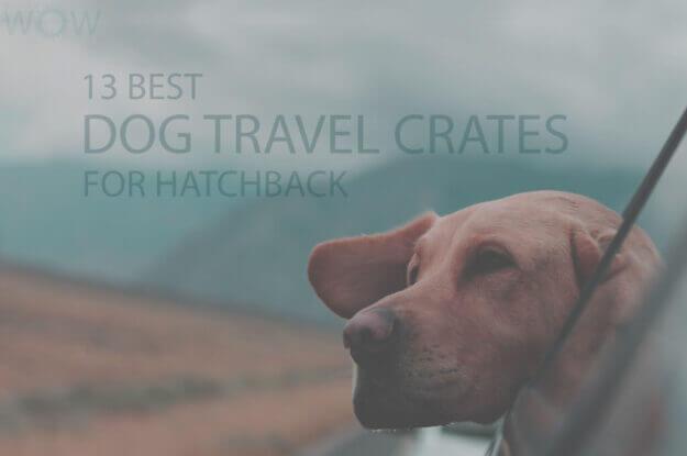 13 Best Dog Travel Crates for Hatchback