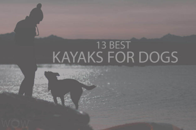 13 Best Kayaks for Dogs