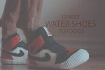13 Best Water Shoes for Dogs
