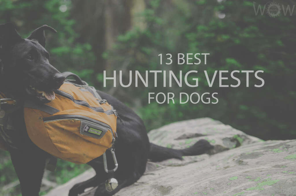 13 Best Hunting Vests For Dogs