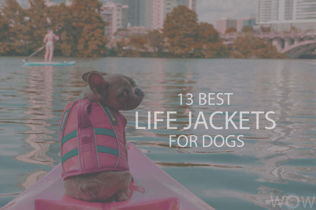 13 Best Life Jackets For Dogs