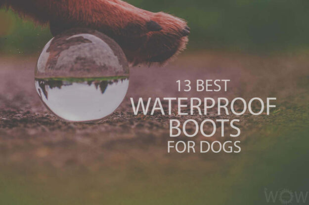 13 Best Waterproof Boots For Dogs
