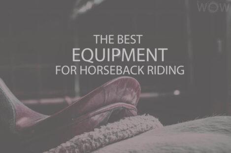 The Best Equipment for Horseback Riding
