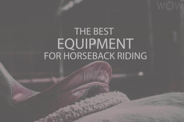 The Best Equipment for Horseback Riding