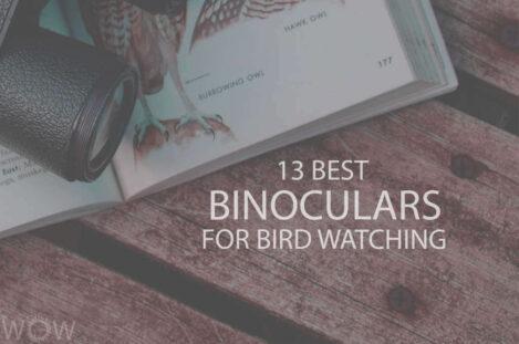 13 Best Binoculars For Bird Watching