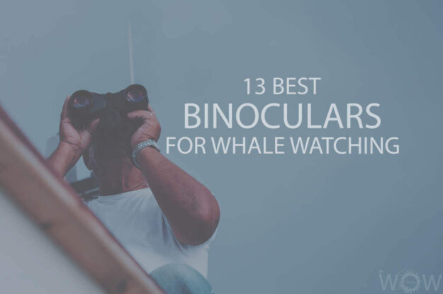 13 Best Binoculars For Whale Watching