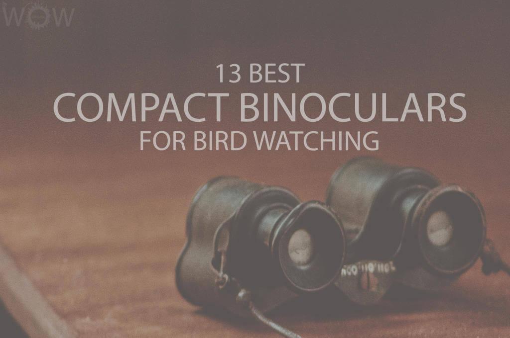 13 Best Compact Binoculars For Bird Watching