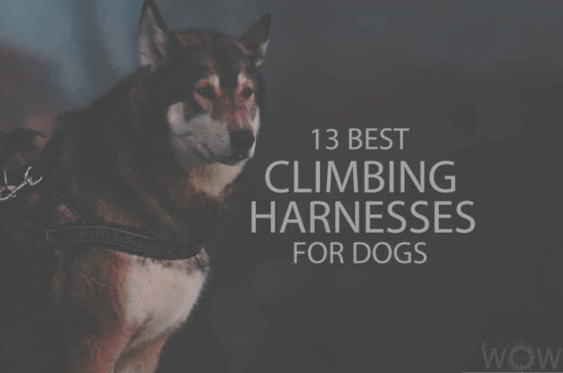 13 Best Climbing Harnesses for Dogs