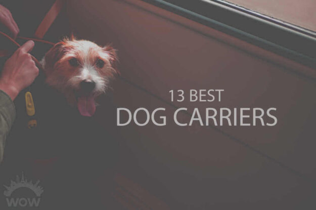 13 Best Dog Carriers
