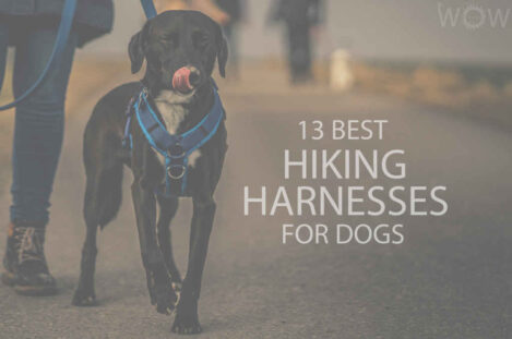 13 Best Hiking Harnesses for Dogs