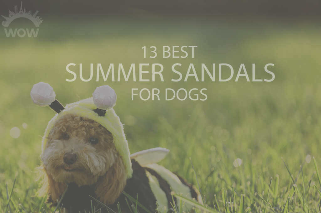13 Best Summer Sandals for Dogs