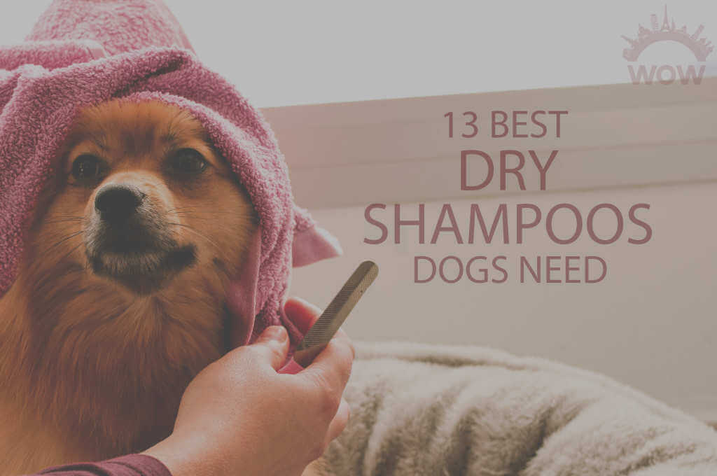 13 Best Dry Shampoos Dogs Need