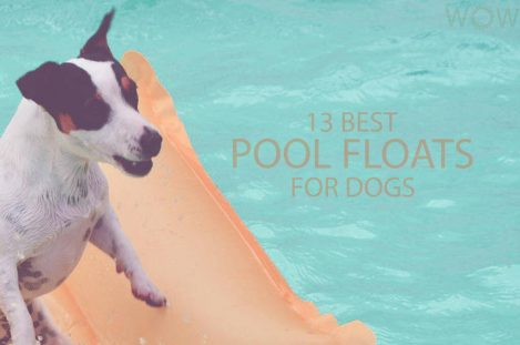 13 Best Pool Floats For Dogs