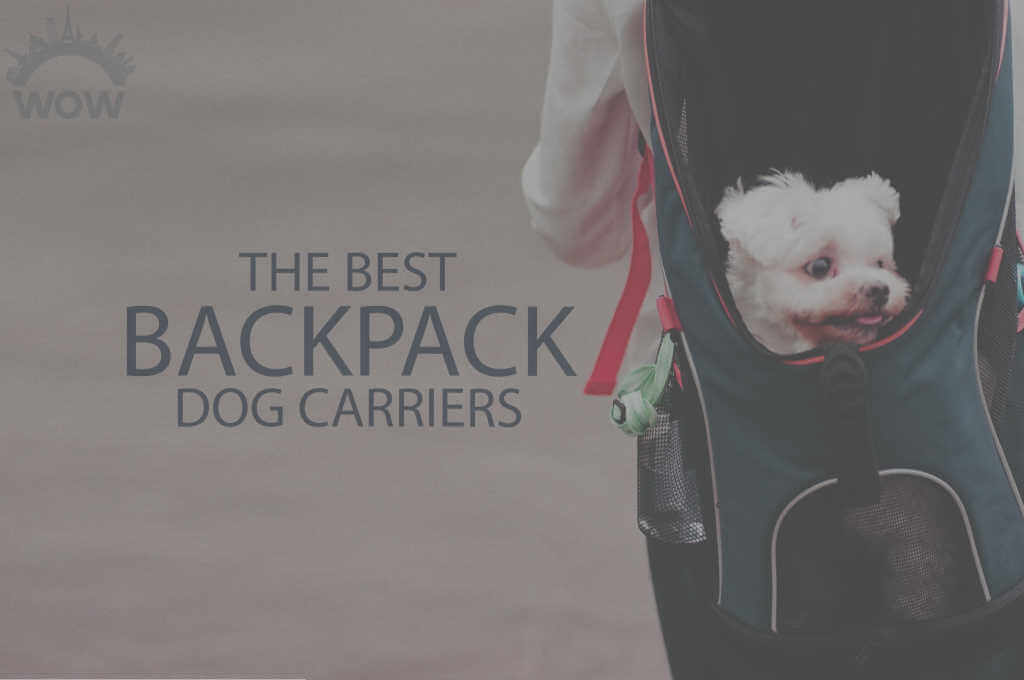 13 Best Backpack Dog Carriers